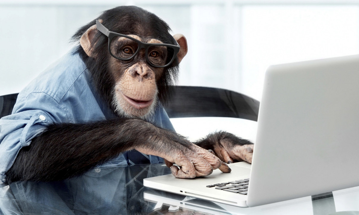 trained chimpanzee at laptop