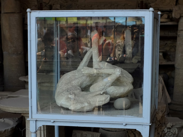the pompeii dog