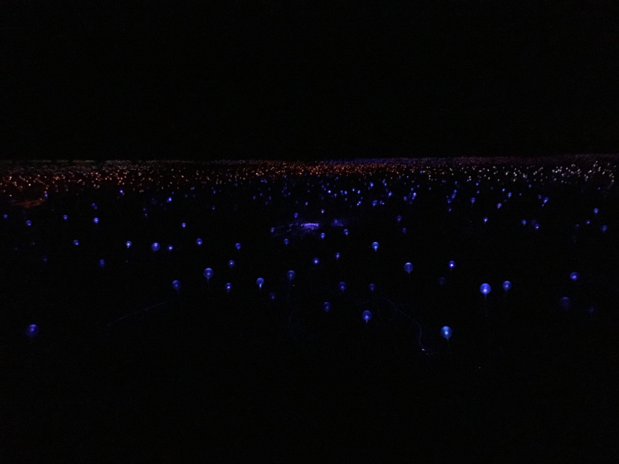 field of lights